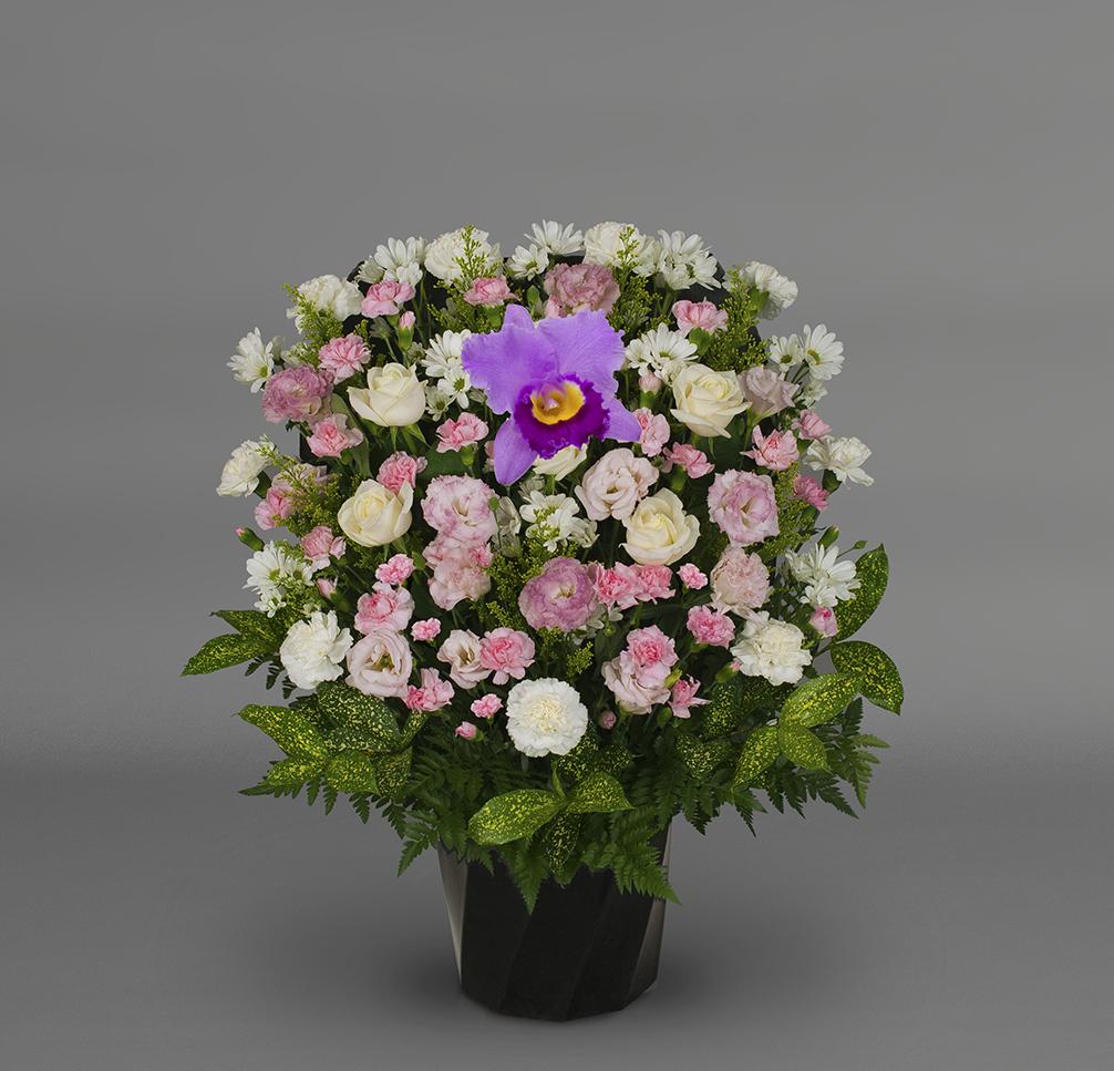 洋花 可憐FY‐1501