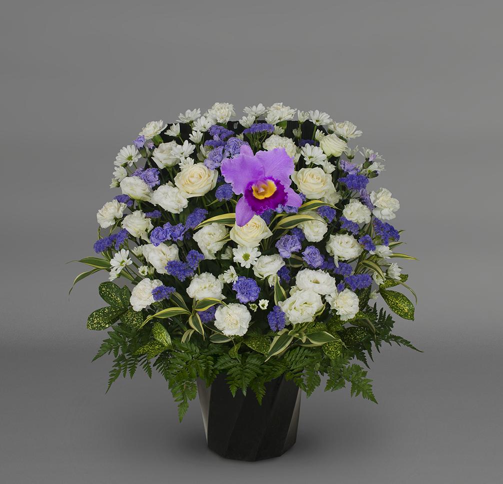 洋花 可憐FY‐1502